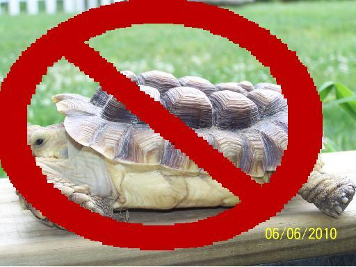 no-sulcata-should-look-like-this