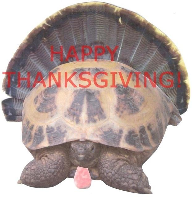 Happy Thanksgiving Tortoise
