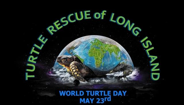 World Turtle Day tee design Scooter 2