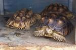Some of the many tortoises that have come through rescue